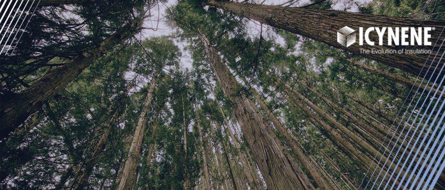 Создадим  более зеленый мир с ICYNENE LAPOLLA