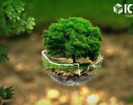 Айсинин поддерживает экологию – 5 деревьев за каждый проданный сет!