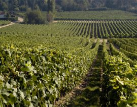 Une mousse haut de gamme pour protéger des grands vins