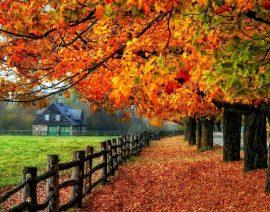 Przygotuj się na jesień z izolacją ICYNENE