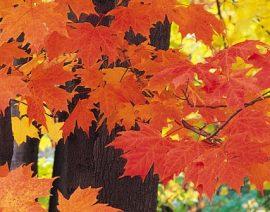 Jesień – przygotowanie domu na nadchodząca zimę