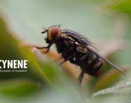 """Теплоізоляція: """"захист Вашого будинку"""" або """"запрошення для комах""""?"""