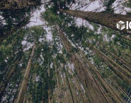 Створимо зеленіший світ з ICYNENE LAPOLLA