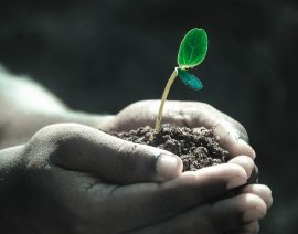 Icynene за збереження і покращення екосистеми!